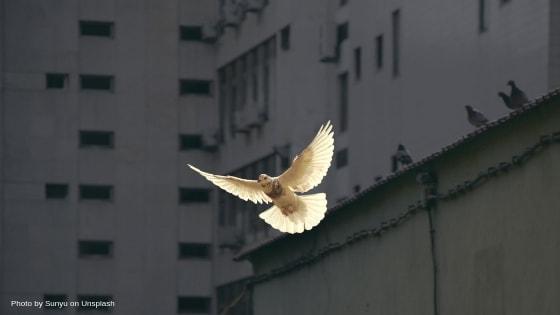 Frieden üben